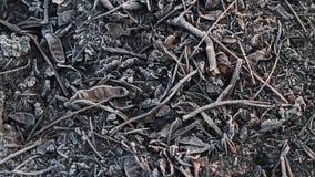 Cinza e geada textured seca vídeos de arquivo