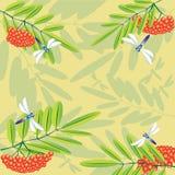 Cinza e libélulas selvagens Imagem de Stock