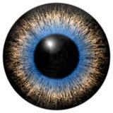Cinza e olhos azuis Ilustração Stock