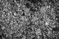Cinzas preto e branco imagens de stock royalty free