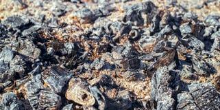 Cinzas queimadas Fotos de Stock Royalty Free