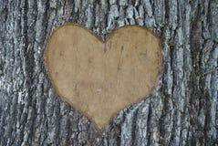 Cinzeladura da árvore Foto de Stock Royalty Free