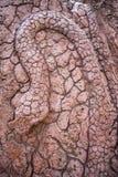 Cinzeladura de pedra vermelha da serpente Foto de Stock Royalty Free