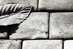 Cinzento - uma folha foto de stock