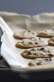 Cioccolato Chip Cookies Fotografie Stock