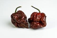 Cioccolato Trinidad Moruga Scorpion Peppers Fotografia Stock Libera da Diritti