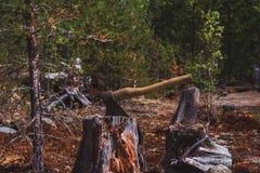 Cioska wtykająca Cioska i drewno Słońce bielił cioskę wtykającą w bloku drewno Obrazy Stock