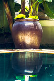 Ciotola asiatica della decorazione di stile di zen allo stagno con acqua del turchese e riflessioni in giardino tropicale con fog Immagini Stock
