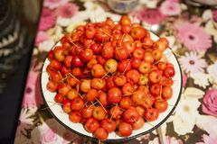 Ciotola con la mela rossa nella campagna fotografia stock