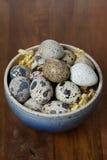 Ciotola con le uova di quaglia fresche Fotografie Stock