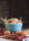 Ciotola del blu delle uova di Brown Fotografie Stock Libere da Diritti