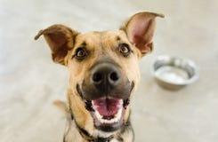 Ciotola del cane Fotografia Stock
