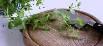 Ciotola della porcellana con i media freschi di Stellaria del cerastio su una tavola bianca di legno Giovane gusto molto delicata immagine stock
