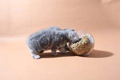 Ciotola di alimento per animali domestici Fotografia Stock Libera da Diritti