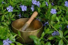 Ciotola di canto fra il fiordaliso dei fiori Immagine Stock