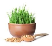 Ciotola di erba fresca del grano con il cucchiaio ed i semi su bianco fotografia stock libera da diritti