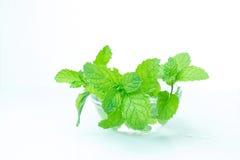 Ciotola di foglie di menta isolate su fondo bianco, vista frontale, min Fotografia Stock Libera da Diritti