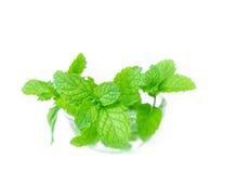 Ciotola di foglie di menta isolate su fondo bianco, vista frontale, min Fotografia Stock