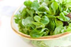 Ciotola di insalata del mache Fotografia Stock