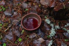 Ciotola di tè sull'erba nella foresta di autunno Fotografia Stock Libera da Diritti