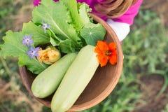 Ciotola di verdure di recente selezionate in mani dei child's Immagine Stock