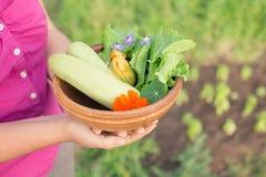 Ciotola di verdure di recente selezionate in mani dei gardener's Immagine Stock