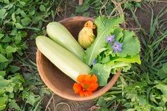Ciotola di verdure di recente selezionate sulla terra Fotografia Stock