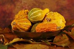 Ciotola di zucche con le foglie secche Fotografia Stock