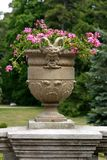 Ciotola diabolica con i fiori fotografie stock