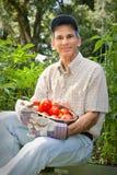 Ciotola felice della holding del giardiniere di pomodori Fotografia Stock