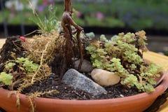 Ciotola succulente della piantatrice della roccia Immagini Stock