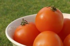 Ciotola Sunlit di pomodori a scarso tasso di acidità arancioni Fotografie Stock Libere da Diritti