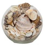 Ciotola trasparente, vaso riempito di conchiglie e pigne, fondo isolato e bianco Fotografia Stock