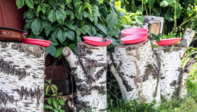 Ciotole dell'alimento sui ceppi della betulla Immagini Stock Libere da Diritti