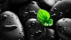 Ciottoli bagnati con il fondo del germoglio Fotografie Stock