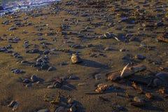 Ciottoli bagnati della spiaggia immagini stock