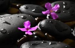 Ciottoli bagnati neri con i fiori Immagini Stock Libere da Diritti