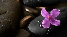 Ciottoli bagnati neri con il fiore Fotografie Stock Libere da Diritti