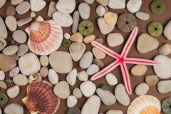 ciottoli, coperture differenti e stelle marine Fotografia Stock Libera da Diritti