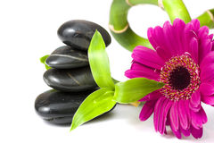Ciottoli d'equilibratura con il fiore della margherita e del bambù Fotografie Stock