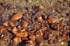 Ciottoli del Mar Rosso Immagine Stock