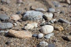 Ciottoli del mare e della conchiglia come fondo Fotografia Stock