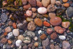 Ciottoli della spiaggia del raggruppamento di marea Immagini Stock Libere da Diritti