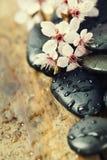 Ciottoli di zen con l'albero della molla immagine stock