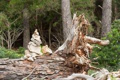 Ciottoli di zen su un tronco di albero Fotografia Stock Libera da Diritti