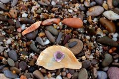 Ciottoli sulla spiaggia con le conchiglie Fotografie Stock Libere da Diritti