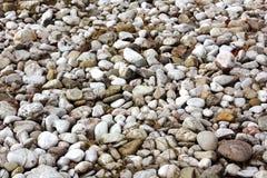 Ciottoli un'erba secca alla spiaggia Fotografia Stock
