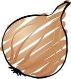 Cipolla illustrazione vettoriale