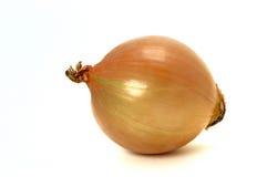 Cipolla Immagini Stock