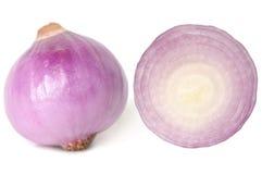 Cipolla, allium cepa Immagine Stock